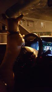 dog-driving-169x300